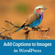 How to Add Caption Text to Images in WordPress